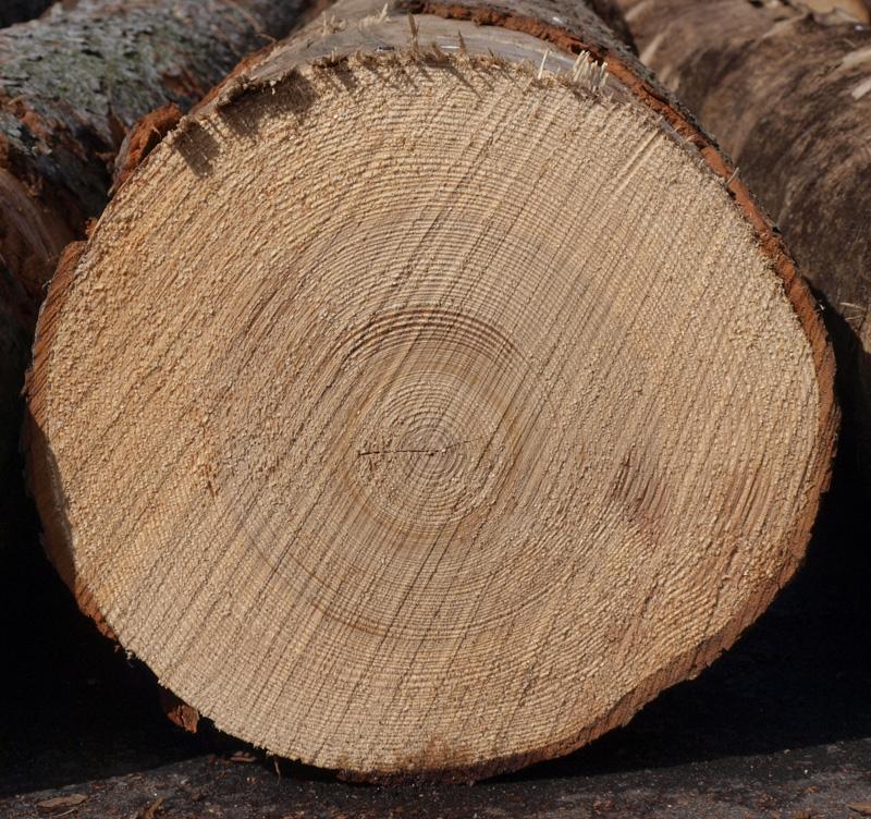 comparație între lemnul de brad și cel de molid